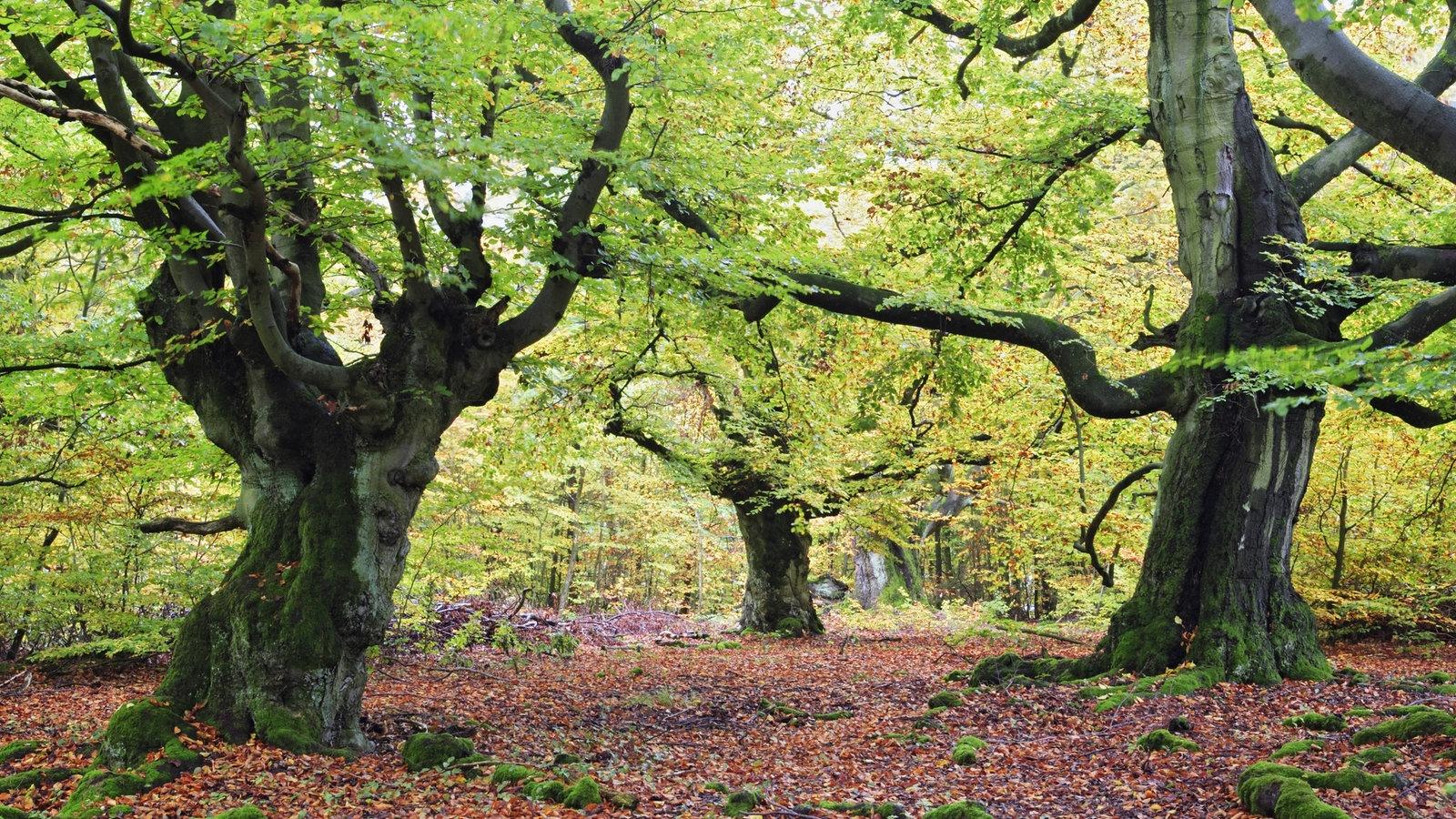Der Wald Taunuskrimi