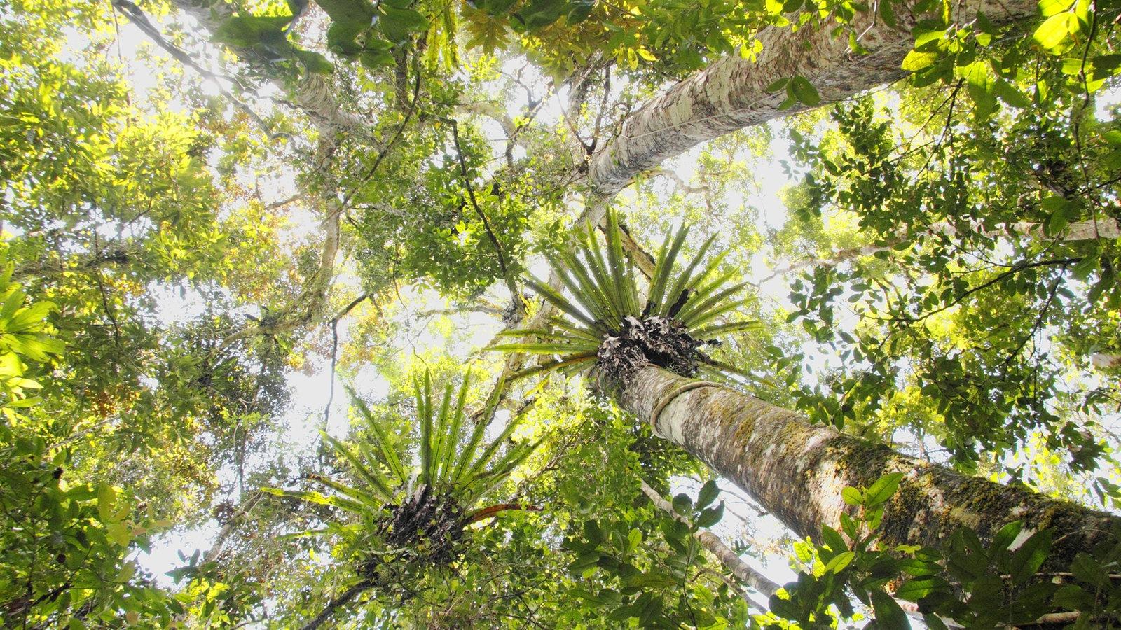 landschaften regenwald regenwald landschaften natur planet wissen. Black Bedroom Furniture Sets. Home Design Ideas