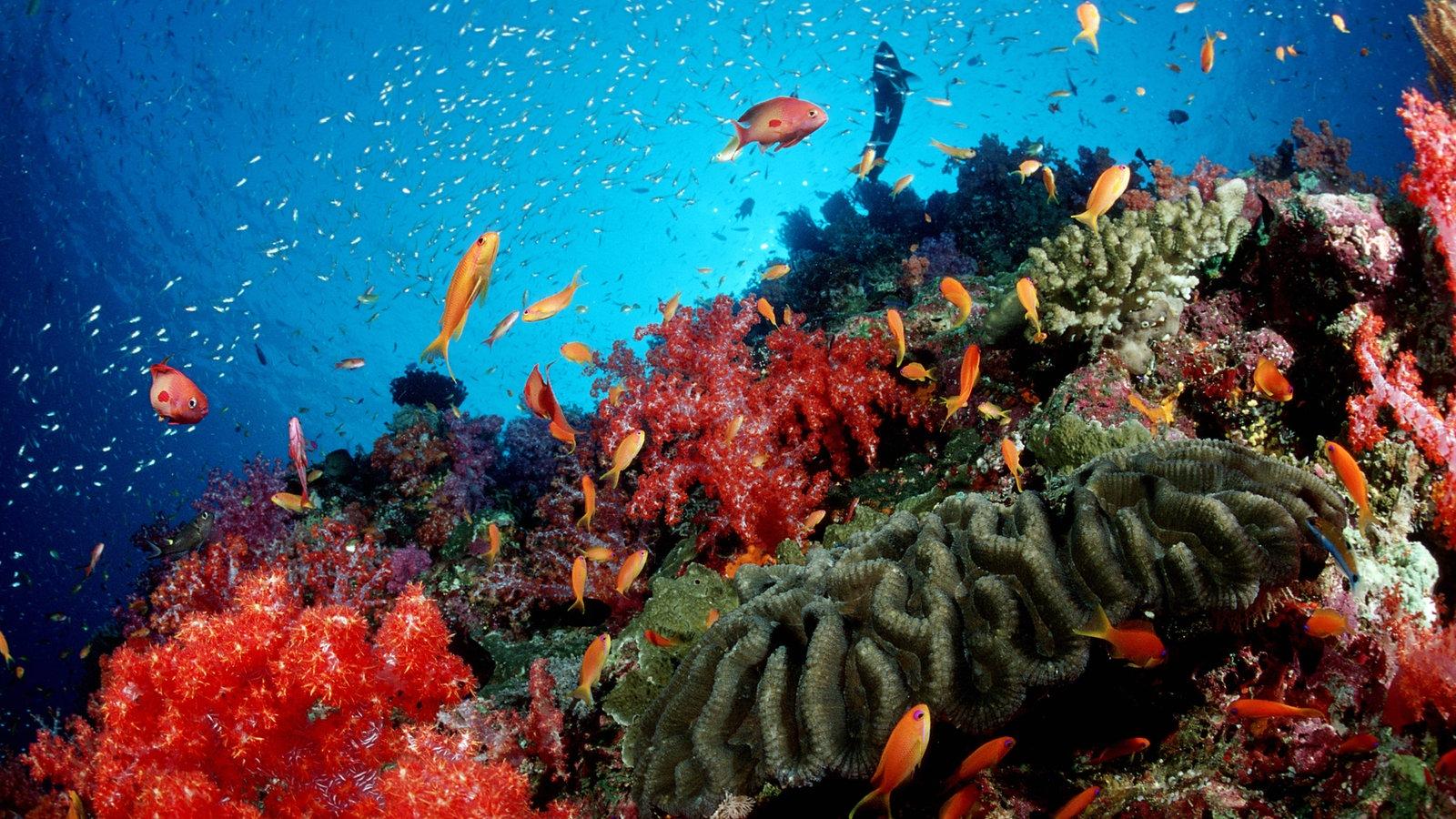 Meer korallenriffe korallenriffe meer natur for Lebensraum fische