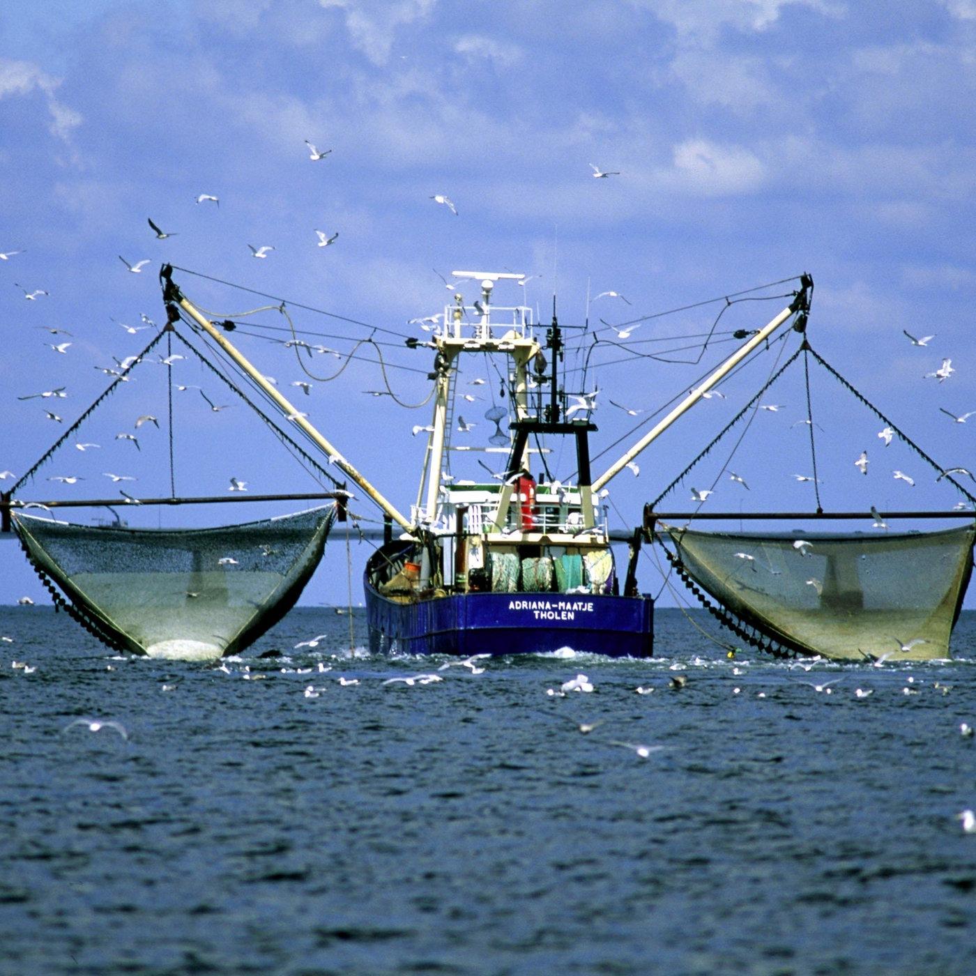 Meer überfischung überfischung Der Meere Meer Natur Planet