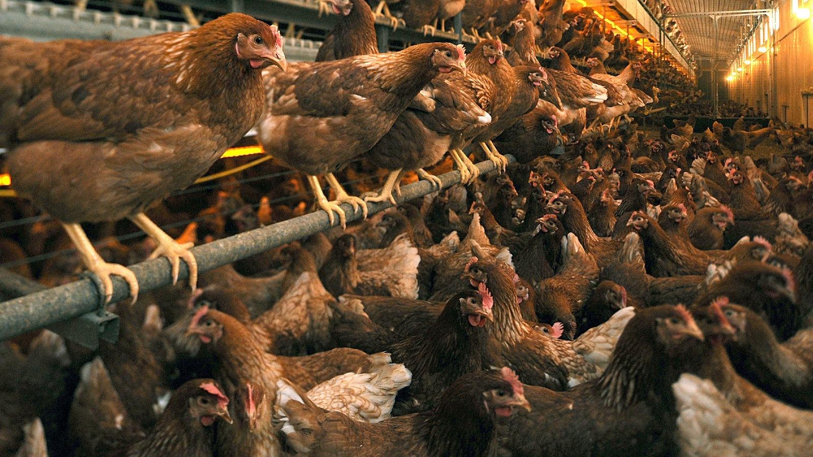 Tierschutz: Tierschutz - Tierschutz - Naturschutz - Natur