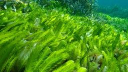 algen pflanzen natur planet wissen. Black Bedroom Furniture Sets. Home Design Ideas