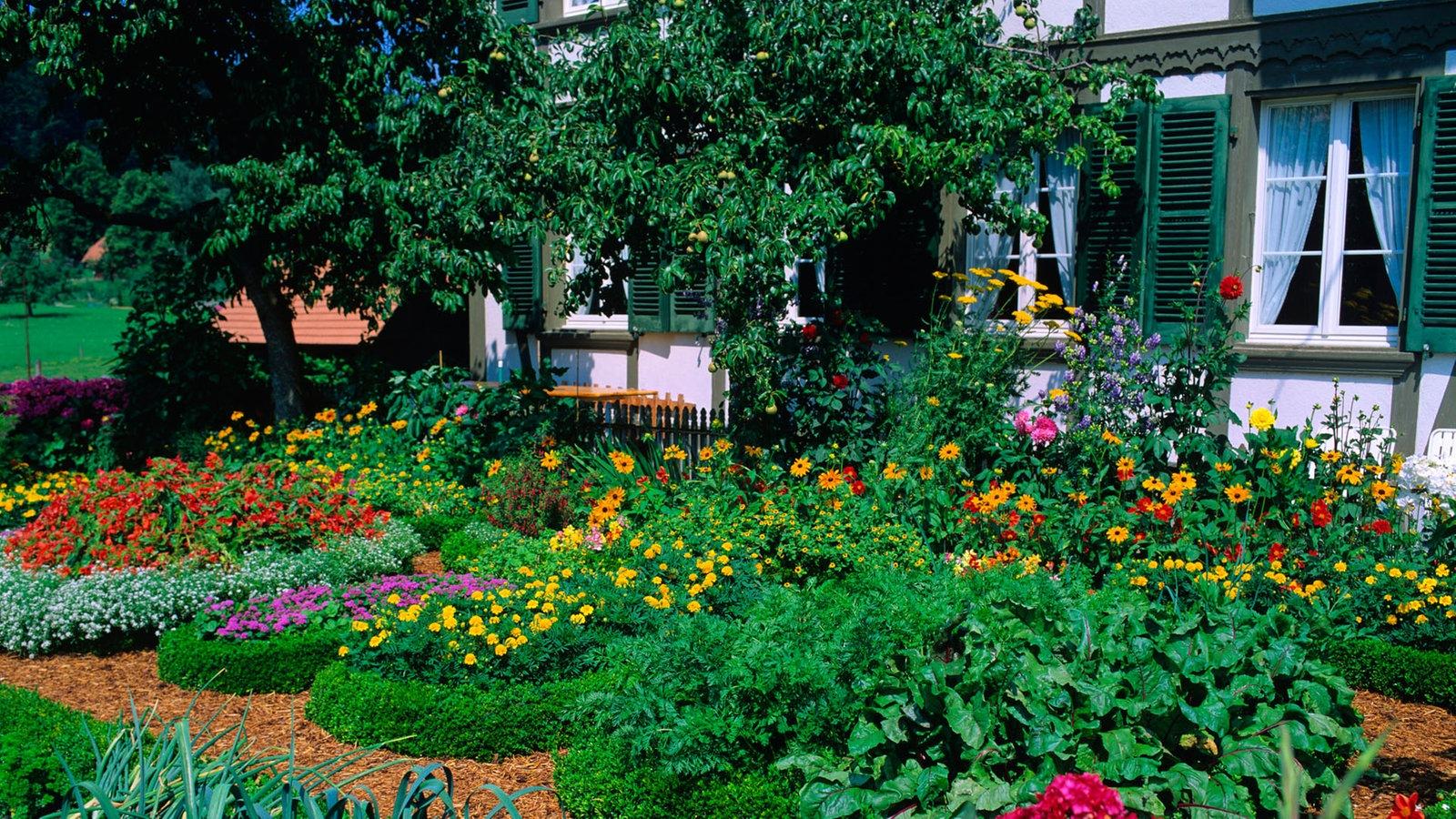 pflanzen gartenkultur pflanzen natur planet wissen. Black Bedroom Furniture Sets. Home Design Ideas