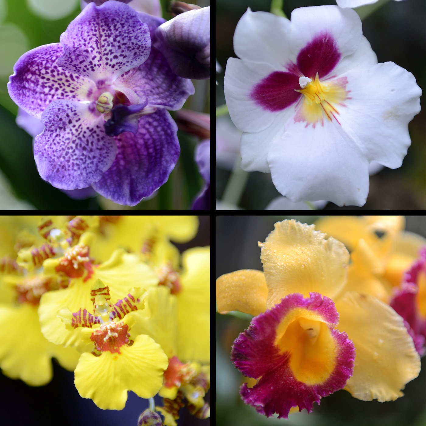 Orchidee klebt