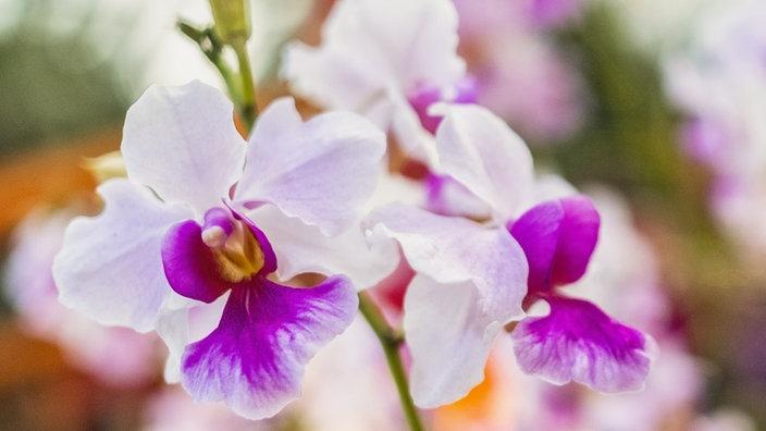 orchideen kleben