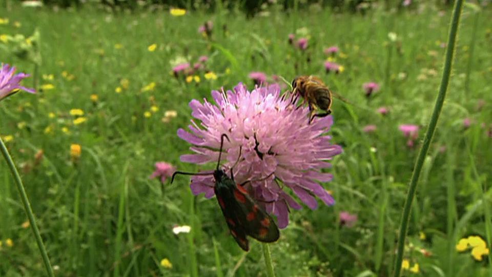 pflanzen wie wir riechen h ren schmecken pflanzen natur planet wissen. Black Bedroom Furniture Sets. Home Design Ideas