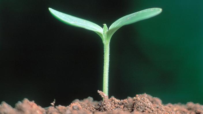 Pflanzen sinne der pflanzen pflanzen natur planet for Wo pflanzen bestellen