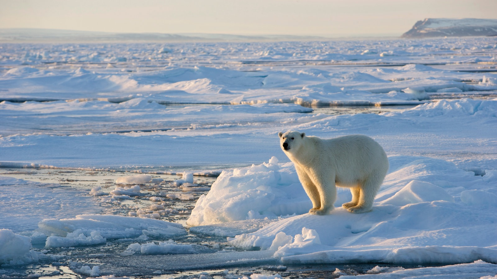 arktis spitzbergen polarregionen natur planet wissen. Black Bedroom Furniture Sets. Home Design Ideas