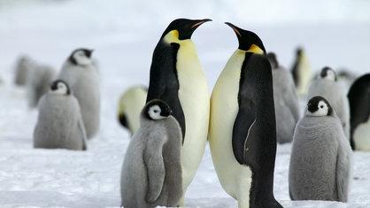 arktis 220berlebensstrategien polarregionen natur