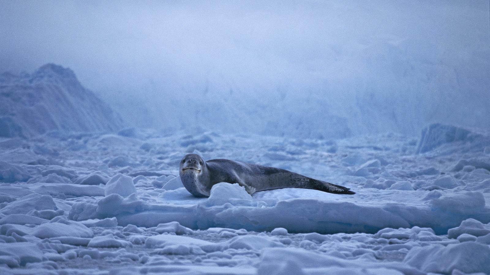 Antarktis Fläche