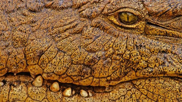Reptilien und Amphibien: Krokodile - Reptilien und Schmuck - Natur ...