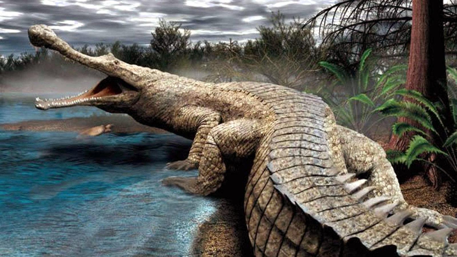 reptilien und amphibien krokodile reptilien und schmuck natur planet wissen. Black Bedroom Furniture Sets. Home Design Ideas