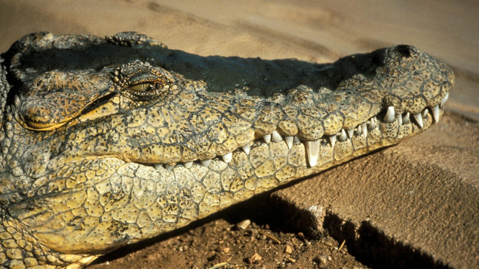 Reptilien und Amphibien: Frösche und Kröten - Reptilien und Schmuck ...
