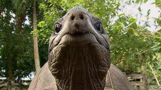 Reptilien und Amphibien: Schildkröten - Reptilien und Schmuck ...