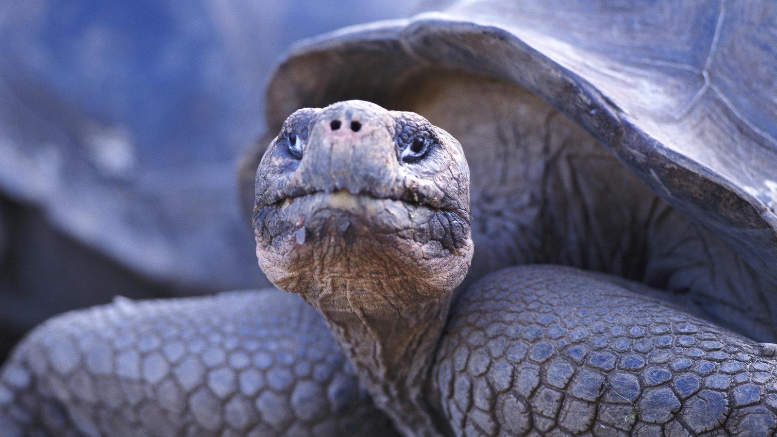 Schildkröten - Wie sie seit über 200 Mio Jahren überleben