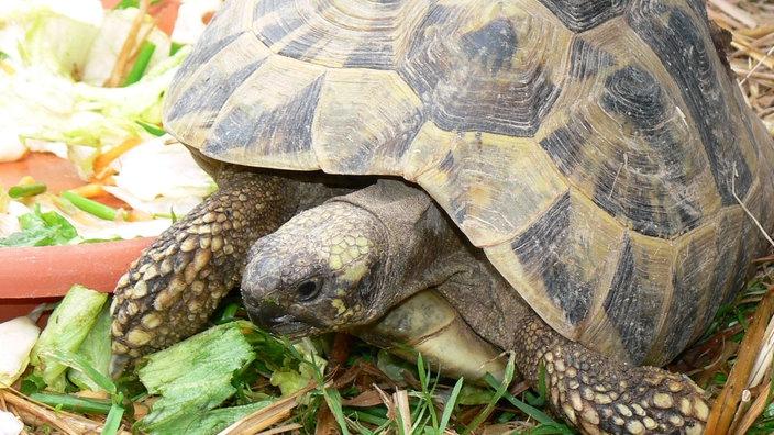 Mini Kühlschrank Für Schildkröten : Schildkröten artgerechte haltung reptilien und schmuck natur