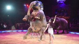 Elefanten machen Kunststücke im Zirkus