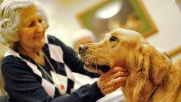 ältere Frau streichelt Golden Retriever