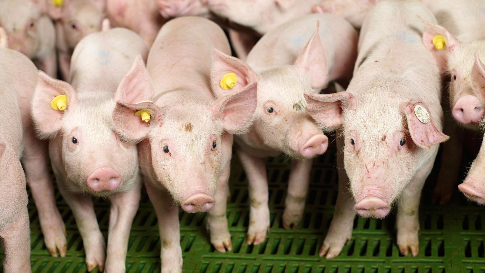 Verbandsklagerecht für Tierschützer vor dem Aus