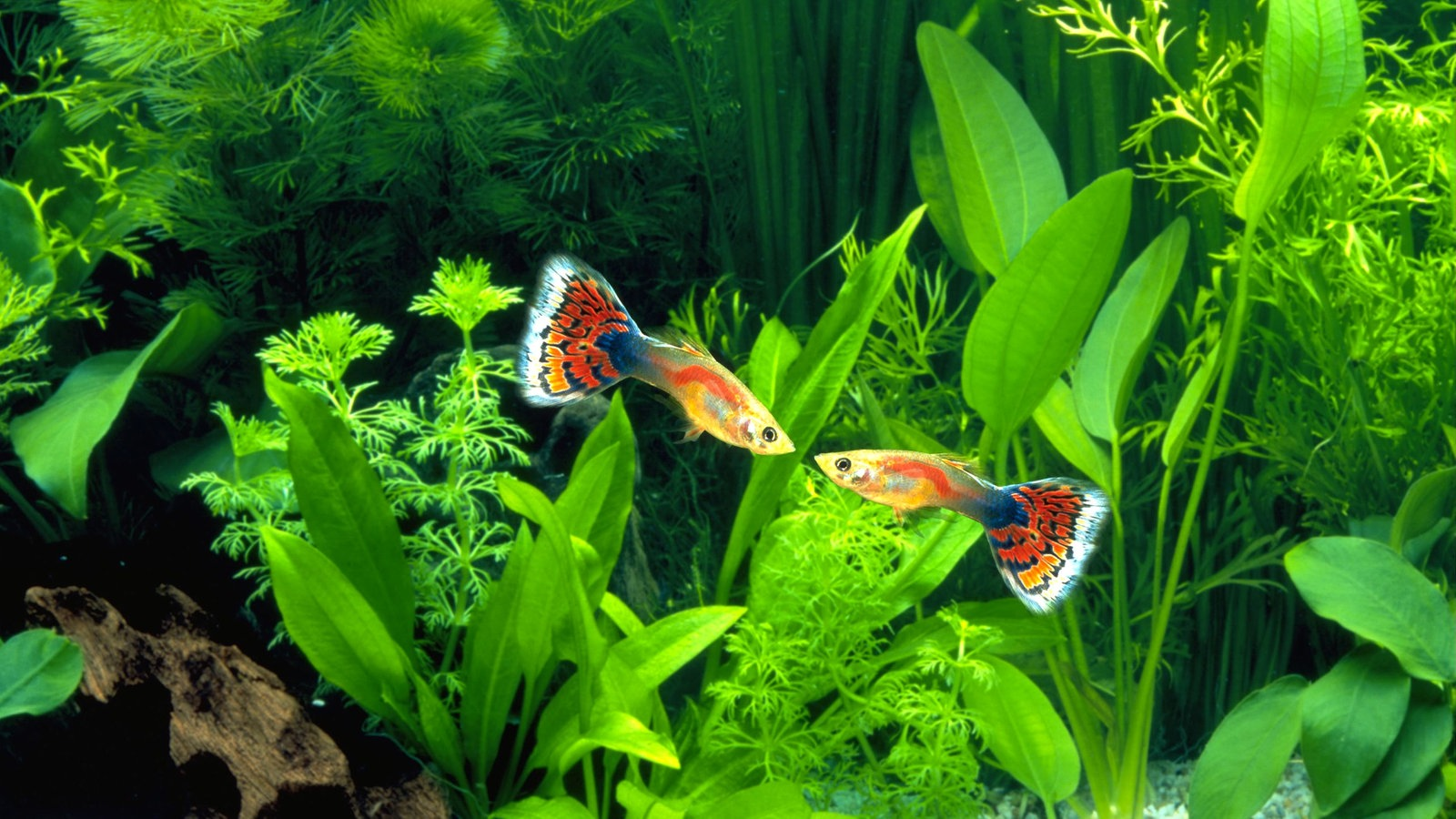 Tiere im wasser fische tiere im wasser natur planet for Fische arten