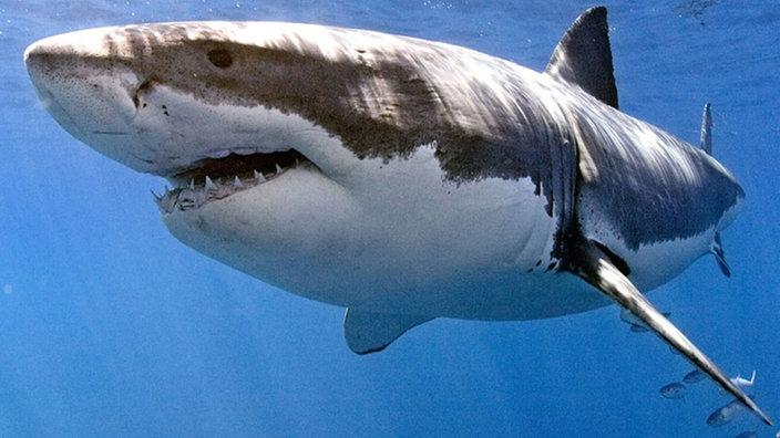 tiere im wasser haie tiere im wasser natur planet wissen
