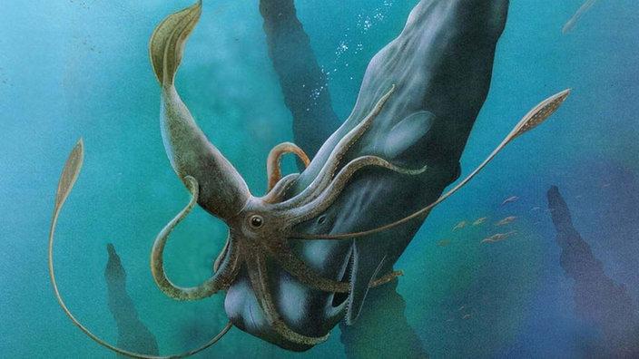 Riesen Oktopus