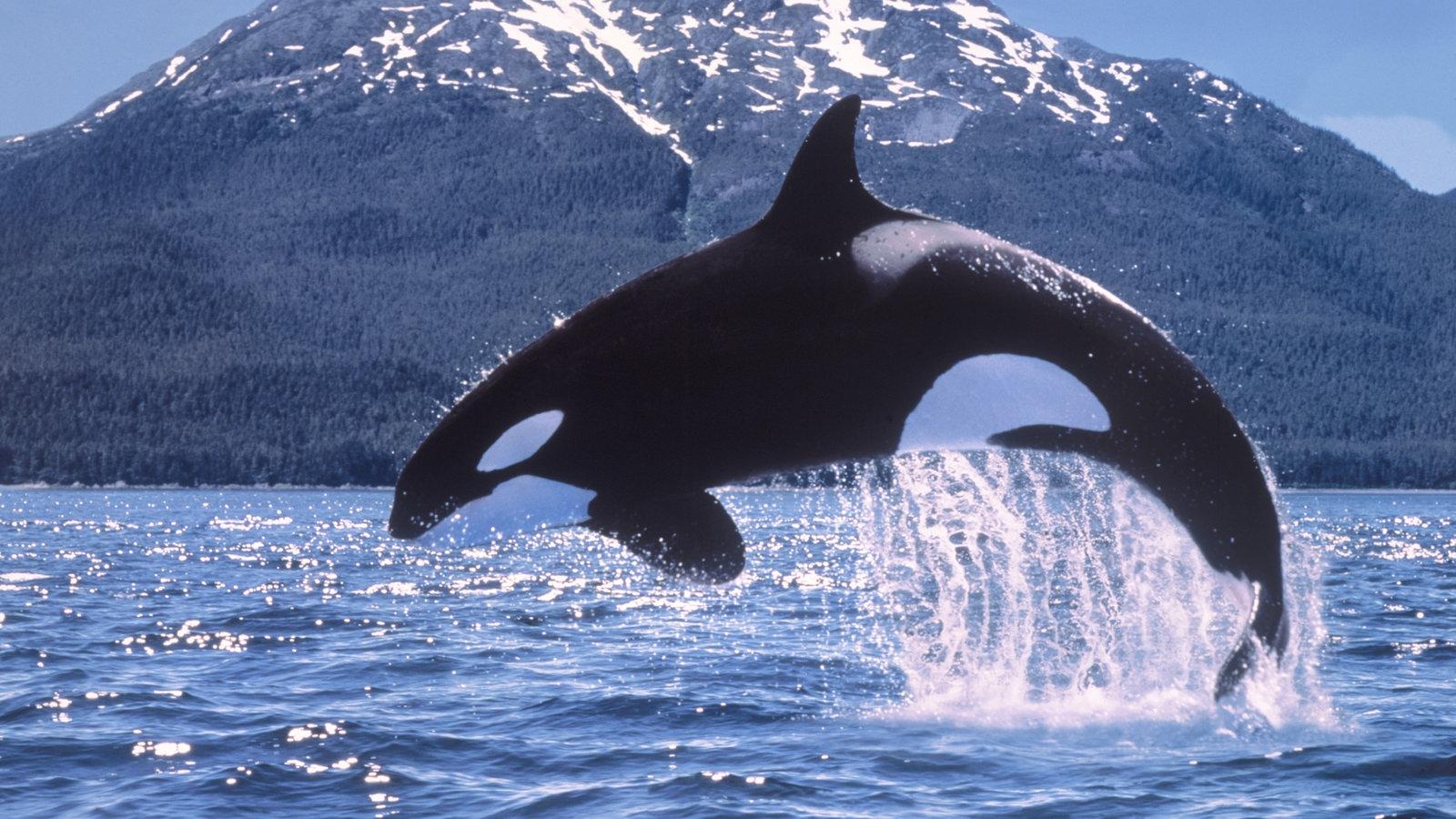 Walarten - Tiere im Wasser - Natur - Planet Wissen