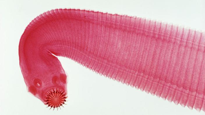 Sex im Tierreich: Sexrekorde - Tierwelt - Natur - Planet