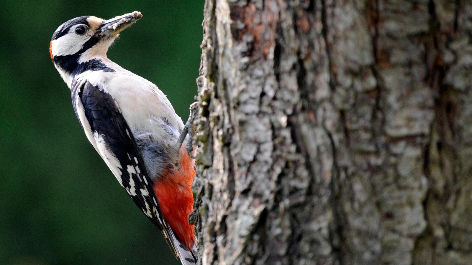 tiere im wald spechte tierwelt natur planet wissen