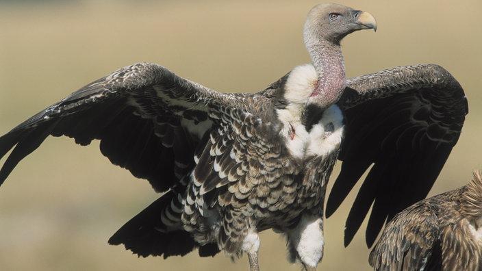 Tierische Flieger Rekorde Aus Der Vogelwelt Tierwelt Natur