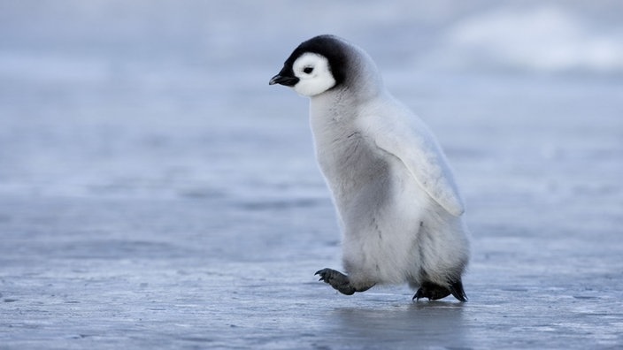 v246gel pinguine voegel natur planet wissen