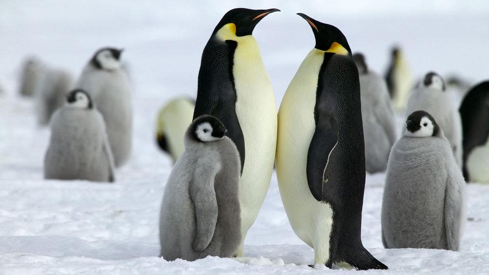Pinguine Arktis