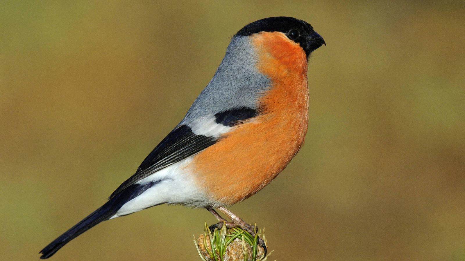 Heimische Vögel Bilder