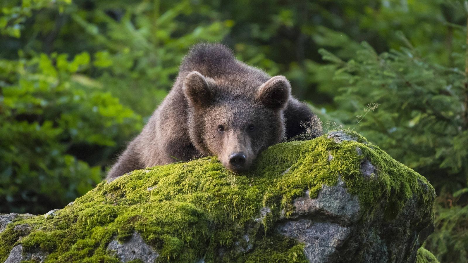 Wildtiere: Wildtiere In Deutschland