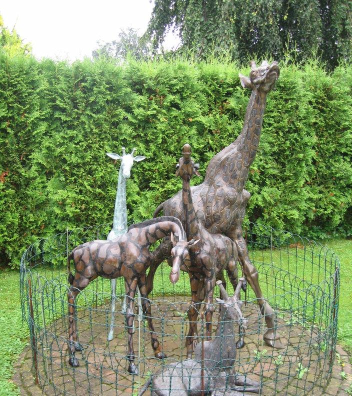 Giraffen  Wildtiere  Natur  Planet Wiss