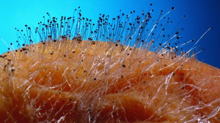 Lebensmittel Schimmelpilze Lebensmittel Gesellschaft Planet