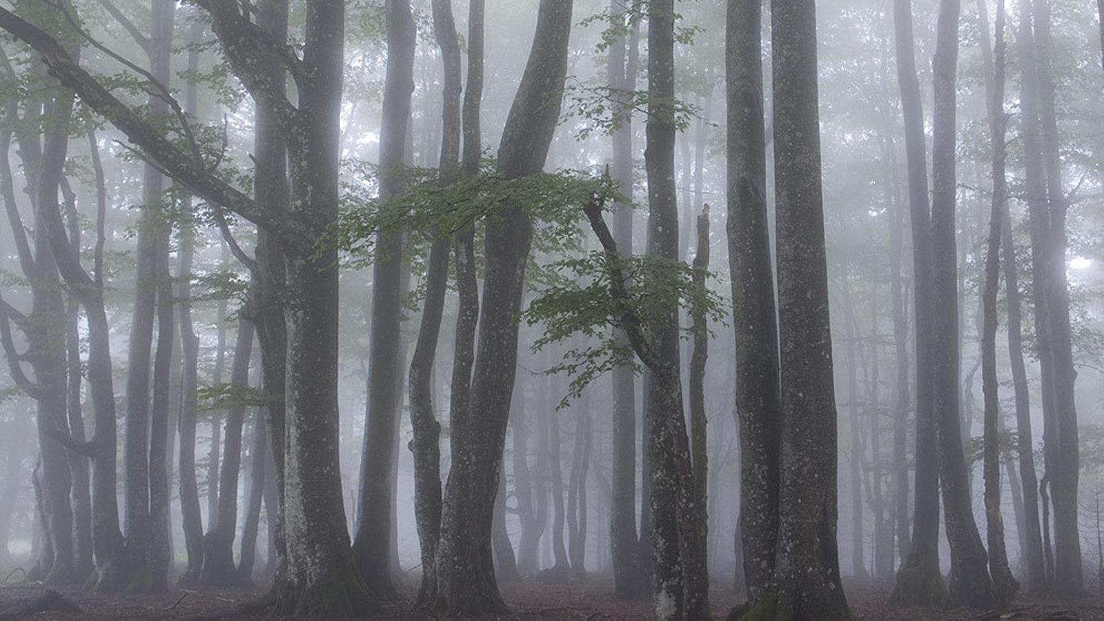 Planet Schwarzwald impressionen aus dem märchenwald schwarzwald planet wissen