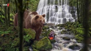 Fotocollage: Ein Braunbär am Fluss, auf einem Stein sitzt ein Schmetterling