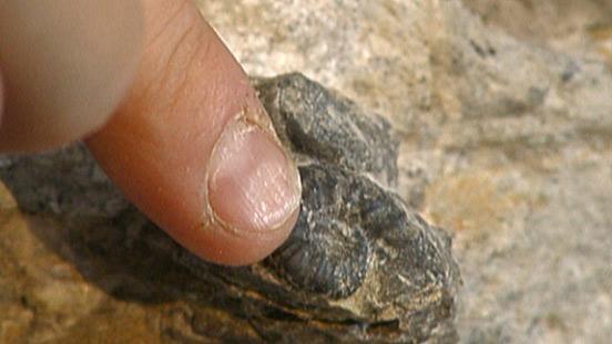 Genauigkeit der Datierung von Fossilien