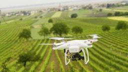 Eine Drohne fliegt über einen Weinberg