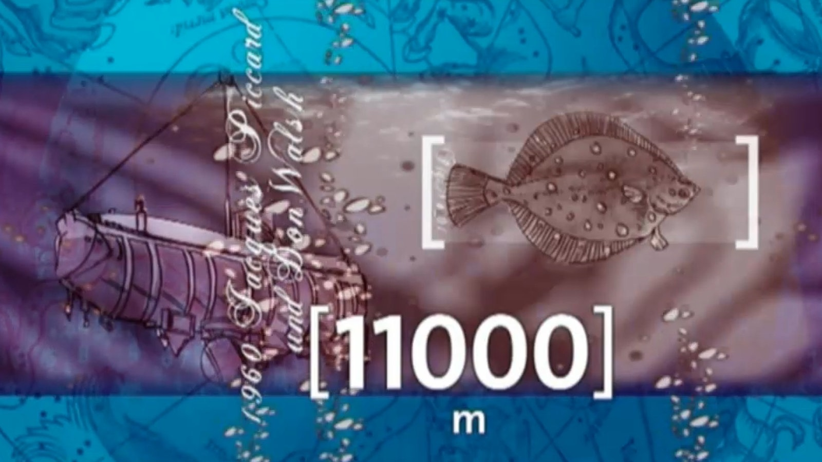 Meer: Tiefsee - Tiefsee - Meer - Natur - Planet Wissen