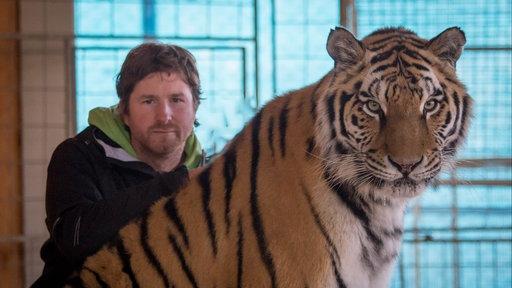 Prortrait von Remo Müller neben einem Tiger.