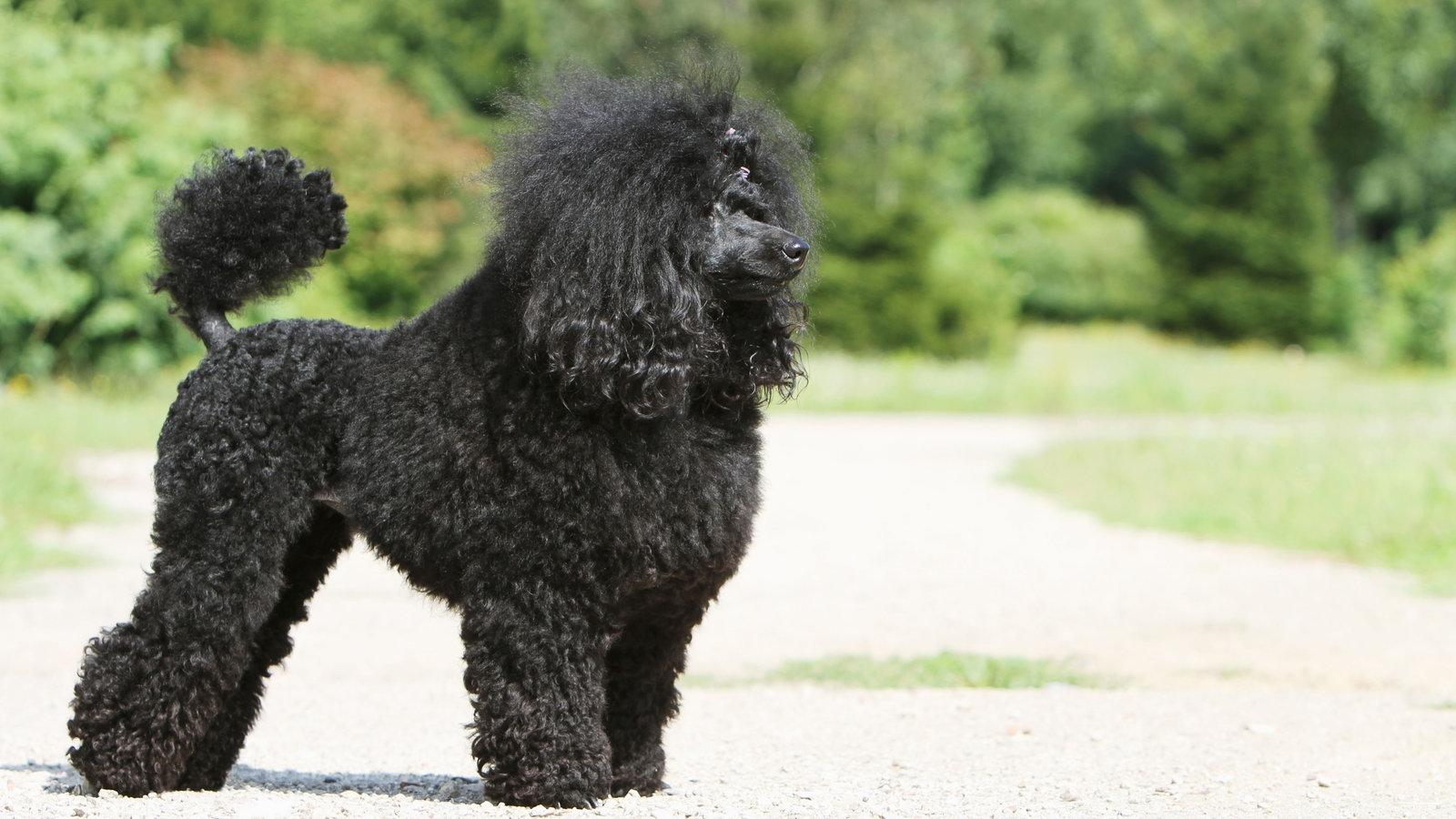 hundehaltung warum stresst der hund beim gassigehen. Black Bedroom Furniture Sets. Home Design Ideas