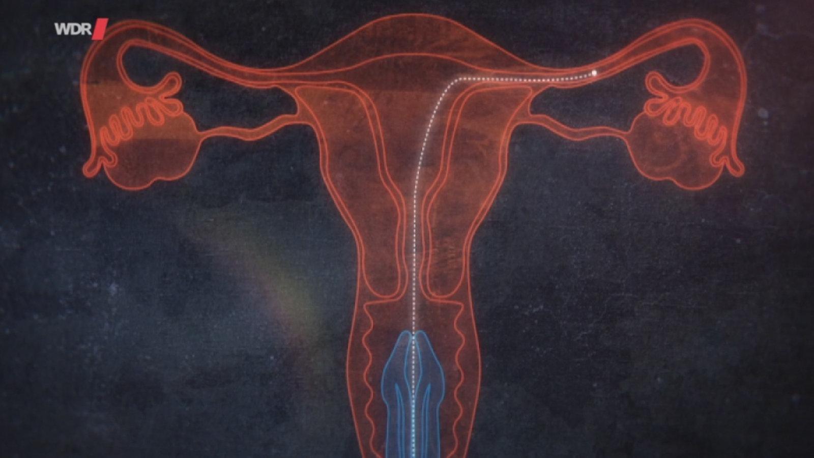 Spermien überlebensdauer luft