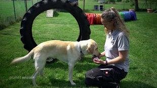 Hund mit Tiertrainerin