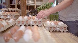 Intelligente Handprothese hilft beim Sortieren von Eiern