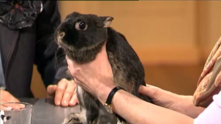Haustiere: Hasen und Kaninchen - Hasen und Kaninchen - Haustiere ...