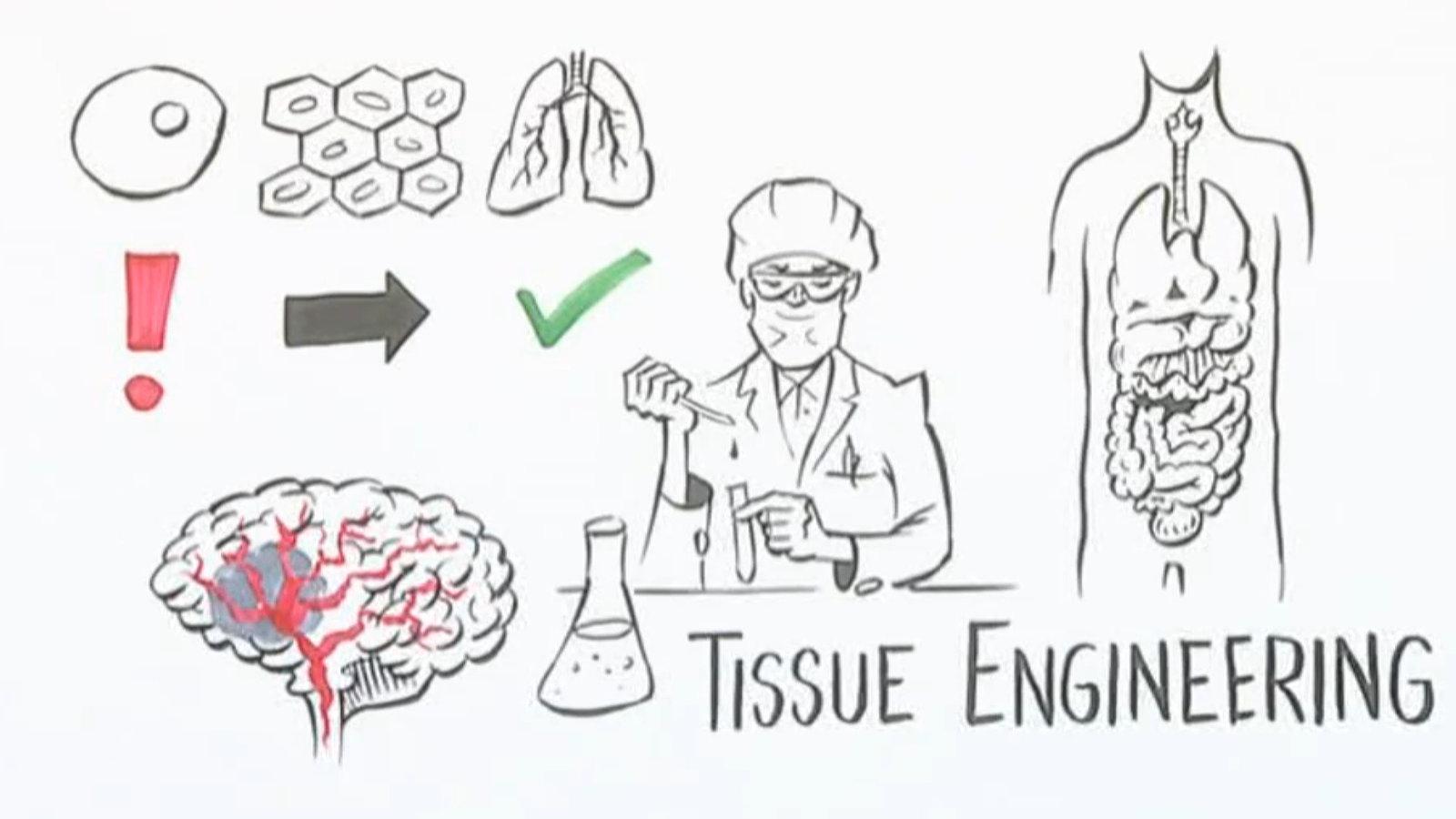 Stammzellen: Heilen mit Stammzellen - Stammzellen - Forschung ...