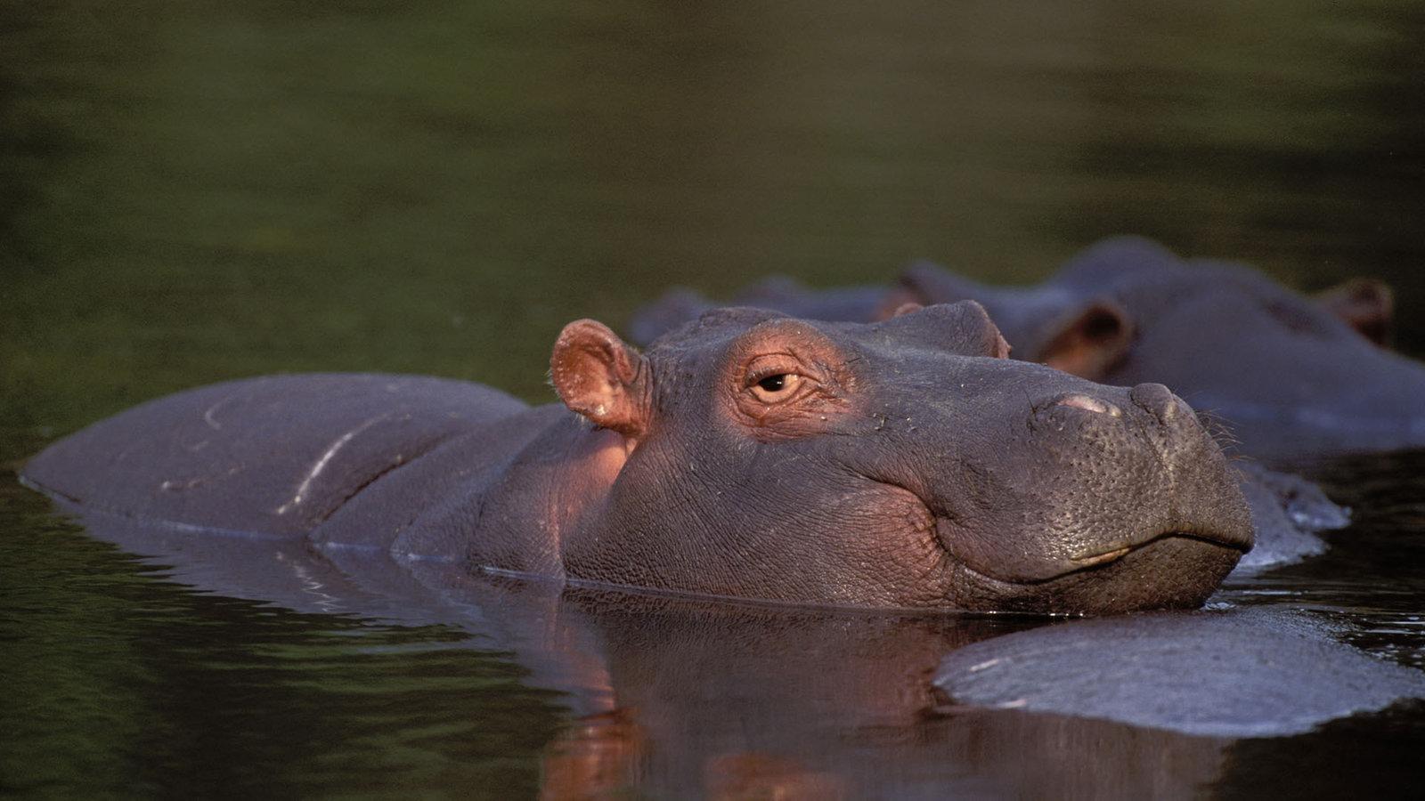 Tiere Die Im Wasser Leben