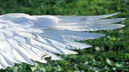 Luftfahrt technik planet wissen for Fliegen aus blumentopf
